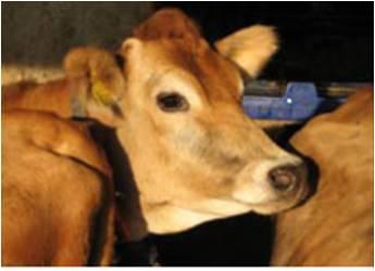 Wchodzą w życie nowe przepisy o ochronie zdrowia zwierząt