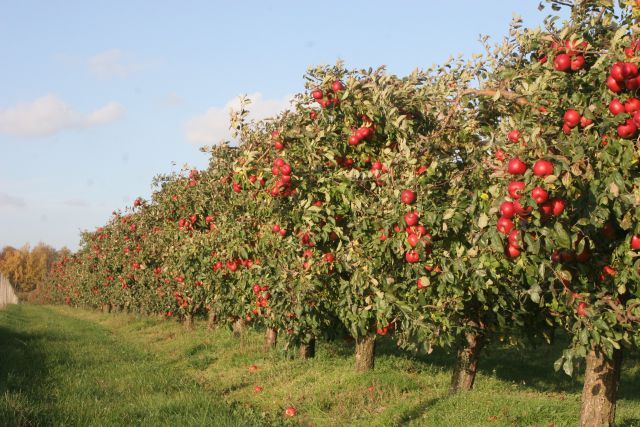 Niemożliwe wsparcie do tych samych powierzchni upraw z ARiMR i ARR dla producentów owoców i warzyw