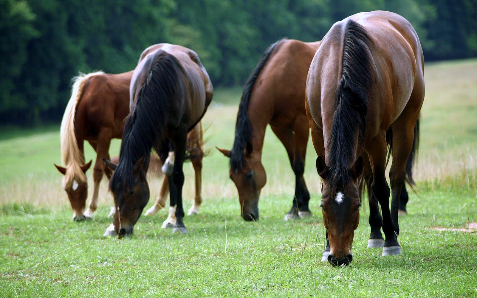 Zmiany w systemie identyfikacji i rejestracji koniowatych