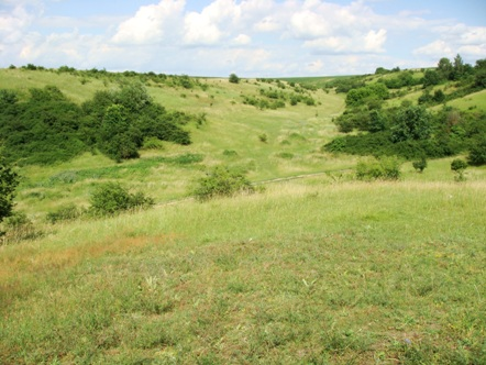 Projekt ustawy o zmianie ustawy o rolnictwie ekologicznym przyjęty przez Radę Ministrów