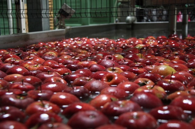Zasady eksportu towarów pochodzenia roślinnego do Białorusi