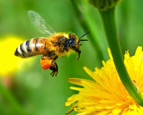 """Uwaga pszczelarze! Do 29 maja można składać wnioski w ramach mechanizmu """"Wsparcie rynku produktów pszczelich"""""""
