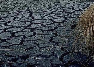 Resort rolnictwa w sprawie nowoczesnego monitoringu suszy rolniczej