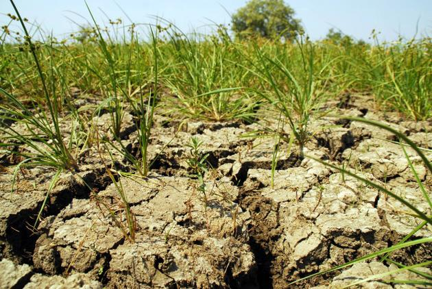 Wniosek o wydłużenie terminu składania do ARiMR wniosków o pomoc w związku z suszą
