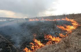 STOP wypalaniu traw na wiosnę!